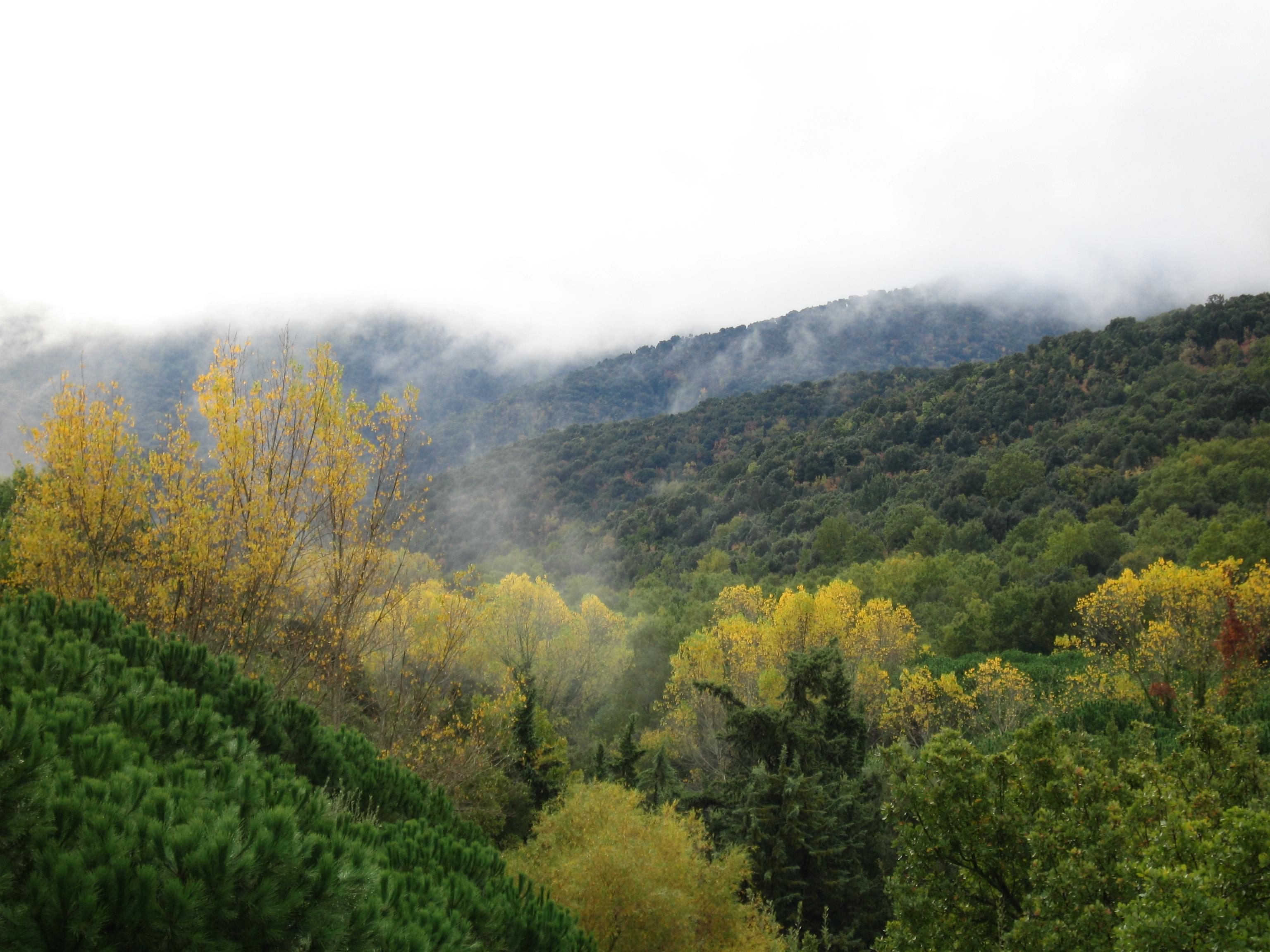 La paura degli alberi