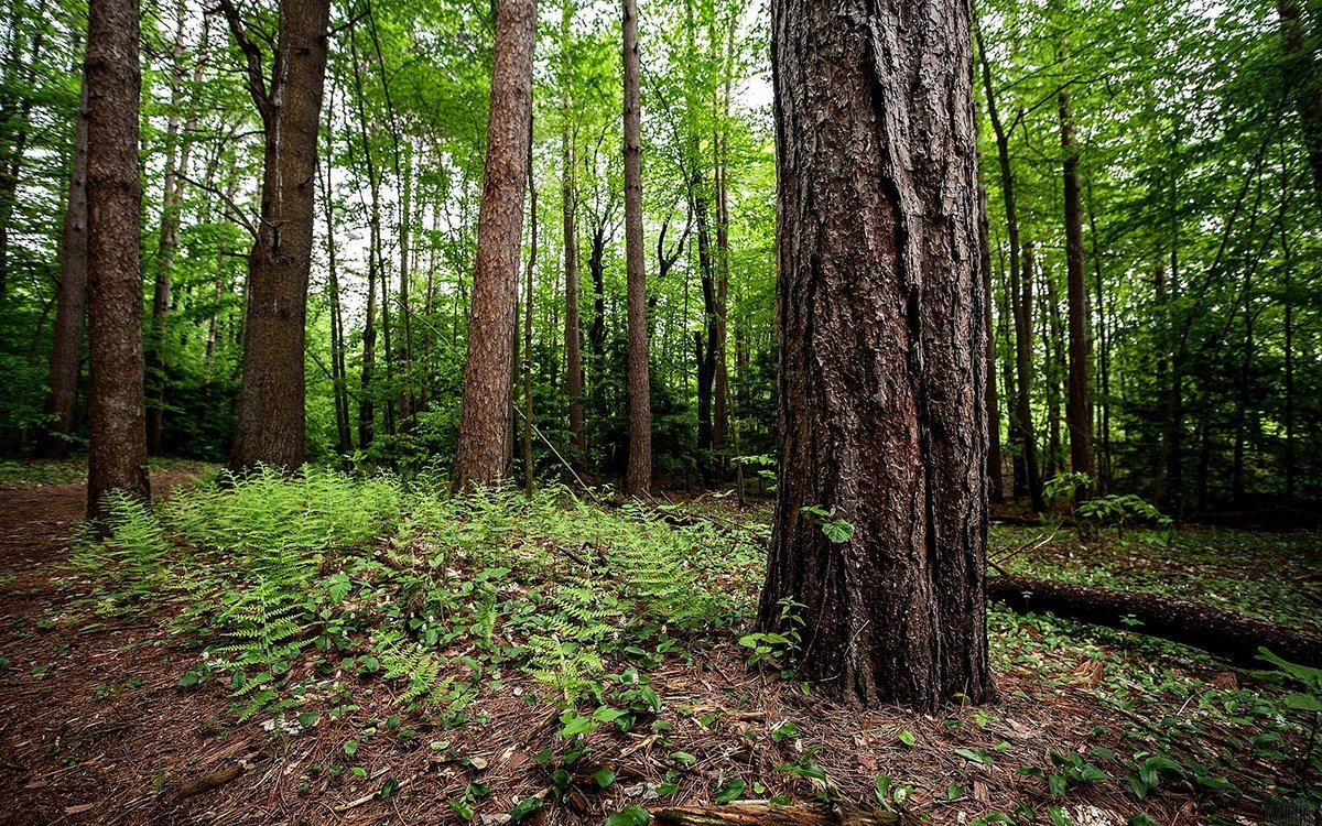 Davvero pensate che gli alberi desiderino essere abbracciati?