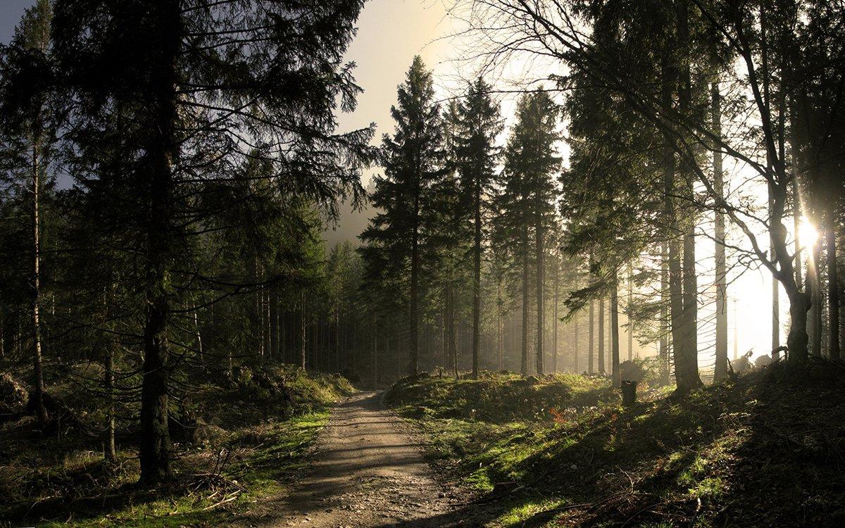 la via della foresta riccardoferrari