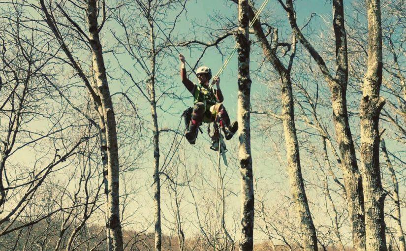 Arborista, treeclimber o arboricoltore