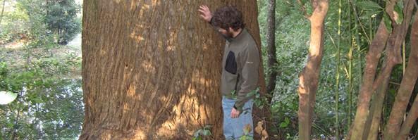 Lunga vita agli alberi!