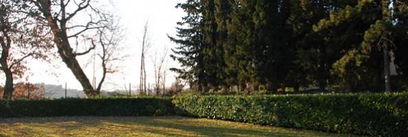 Gli apparati radicali: conoscerli per la migliore gestione degli alberi ad alto fusto