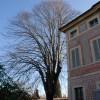 La cura degli alberi in ambiente urbano: ne parliamo con due esperti