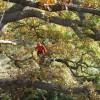 Treeclimbing spirit