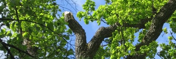 Arboricoltura nell'ecosistema albero