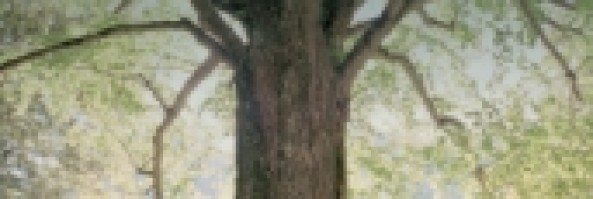 Recensione: Ai piedi degli alberi.