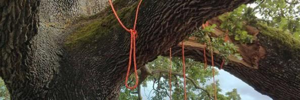 La quercia delle checche: un albero per gli alberi.