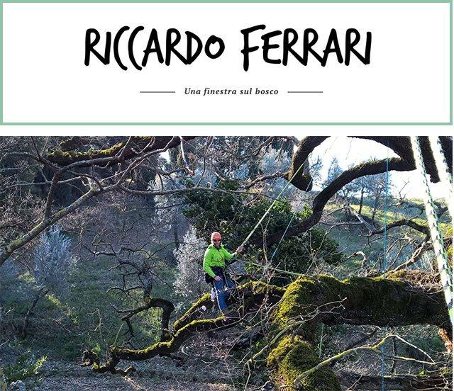 treeboy-opening-riccardo-ferrari-2