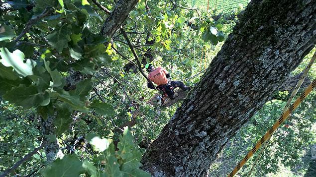 arboricoltore-ecoetico